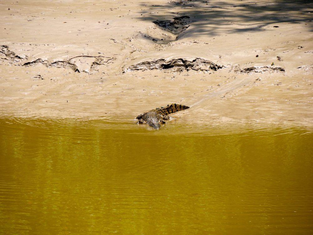 Crocodile Attack, East Alligator River