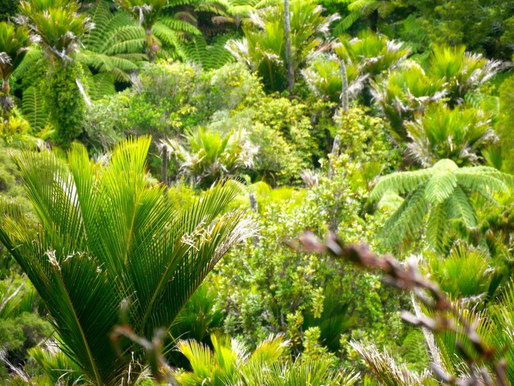 Waitakere Ranges Regional Park, Auckland