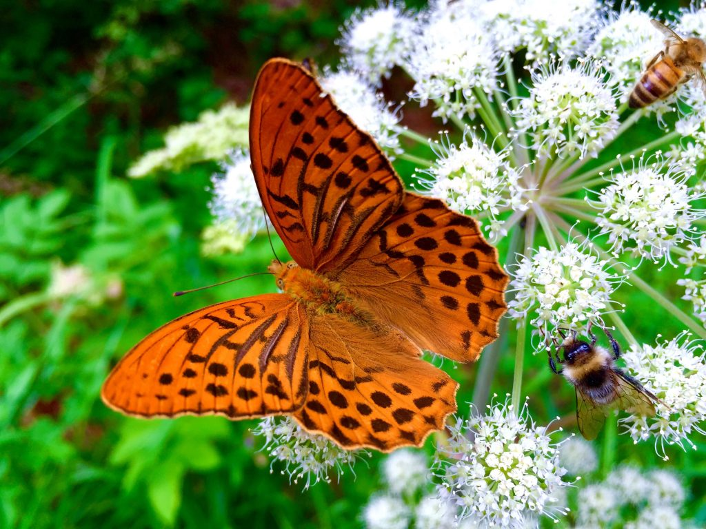 Schwebe wie ein Schmetterling, stich wie eine Biene