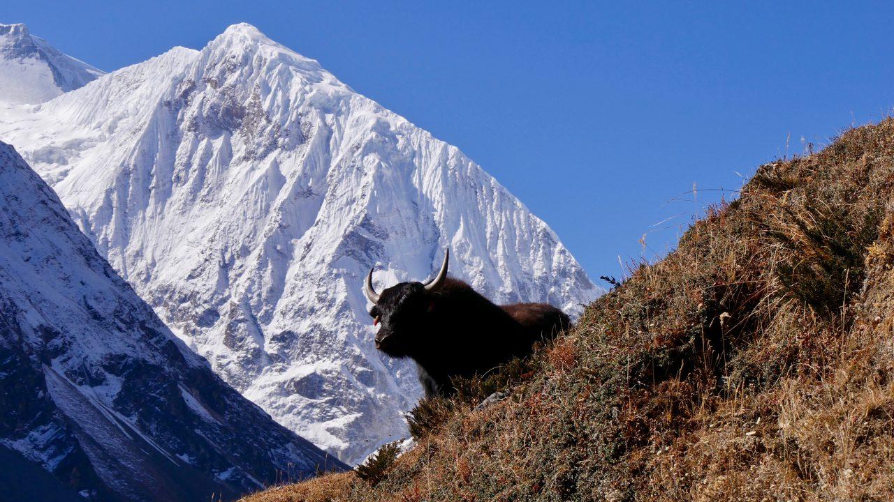 Tag 10: Samdo (3.875) - Dharamsala (4.460)
